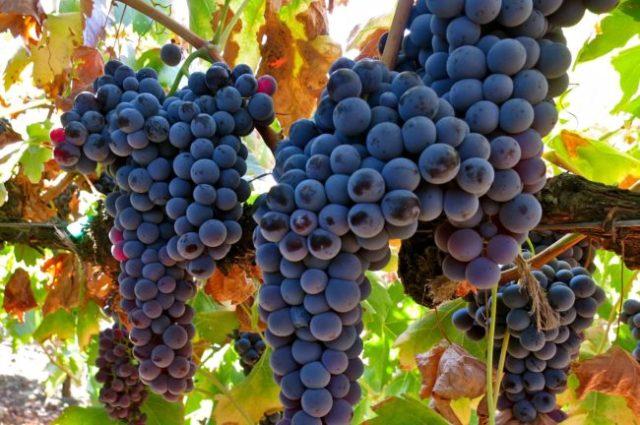 sopas portuguesas com vinho tinto