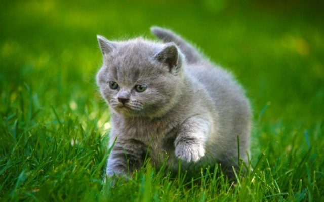 nunca deve fazer a um gato