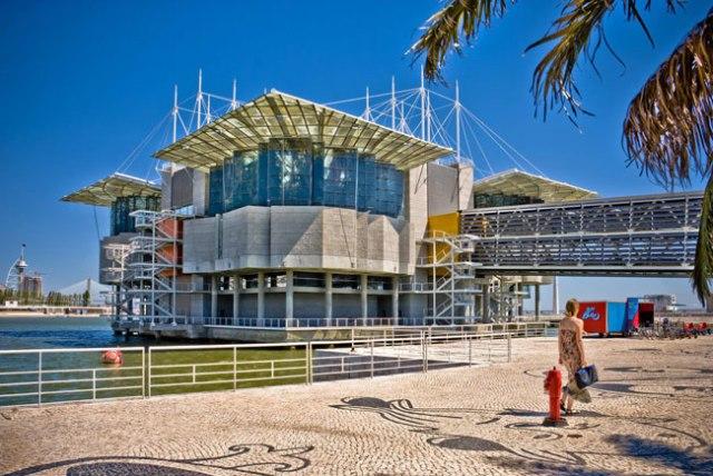 Curiosidades imperdíveis do Oceanário de Lisboa