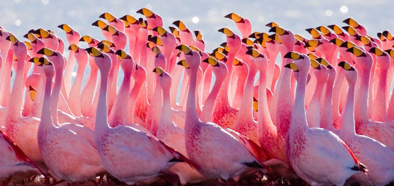 Image result for flamingo salt lake cyprus