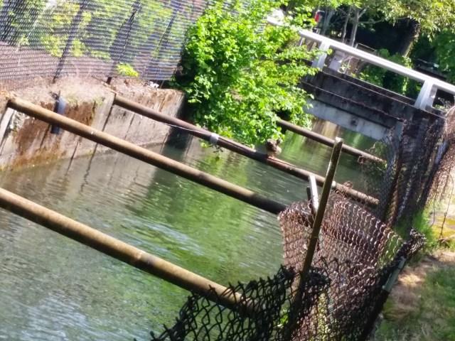 Open Channelized Creek