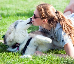 Service husky Juniper plays with students in the grass on South Quad on Friday. Juniper is a diabetes alert dog for sophomore Amy Mansfield, one of several students on campus with a service animal.