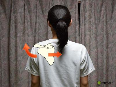 いかり肩肩甲骨