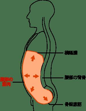腹圧・ローカルマッスル