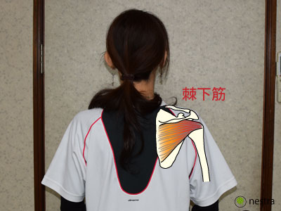 肩セラバンド棘下筋