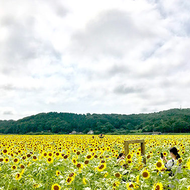 Family photo at the sunflowers at The Sunflower Festival in Mashiko nearby Tokyo