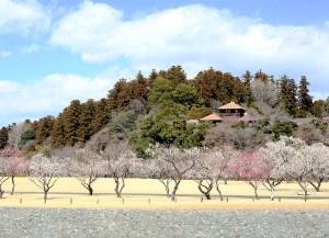 Mito no Ume Matsuri (Mito Plum Blossom Festival) near Tokyo