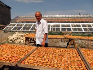 NEF returned to Armenia in 2004 to support rural economic development with micro-financing. In 2013, NEF expanded its focus to include economic programs for survivors of domestic violence. Drying peaches in Ptghavan, Tavush Province, Armenia, 2011.