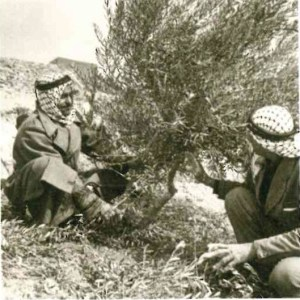 Olive tree-planting projects in Jordan and Lebanon in the 1960s foreshadowed NEF's current Olive Oil Without Borders project, a collaboration with the U.S. Agency for International Development in Israel and the Palestinian territories.