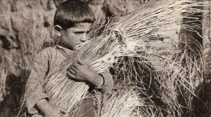 Boy with wheat harvest at Rodosto farming colony