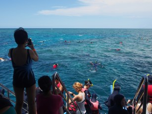 Lot to see for snorkelers as well