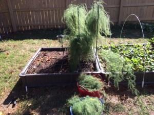 1/2 Cleaned Asparagus