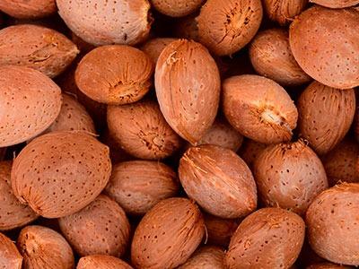 Huile végétale d'amande: Prunus Amygdalus Dulcis Oil