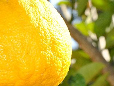 Huile Essentielle de Citron: Huile Essentielle de Citrus Limonum