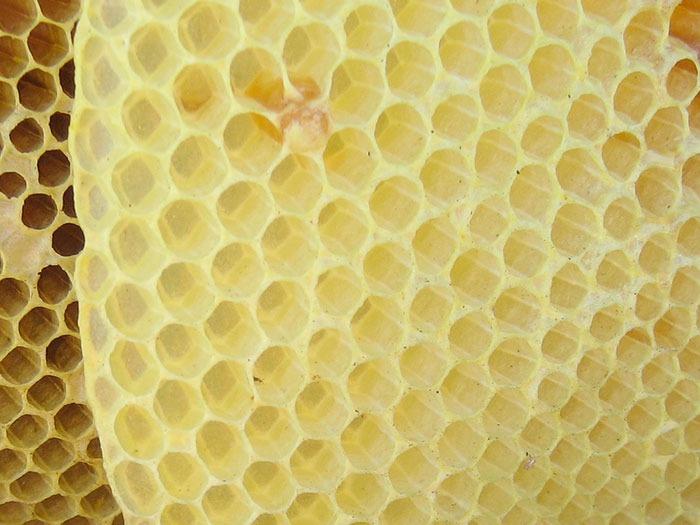 Cera blanca de abeja: cera alba