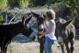 Majada-pirata-estrella, burros-Neathea
