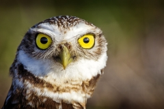 These Owls are just so comical