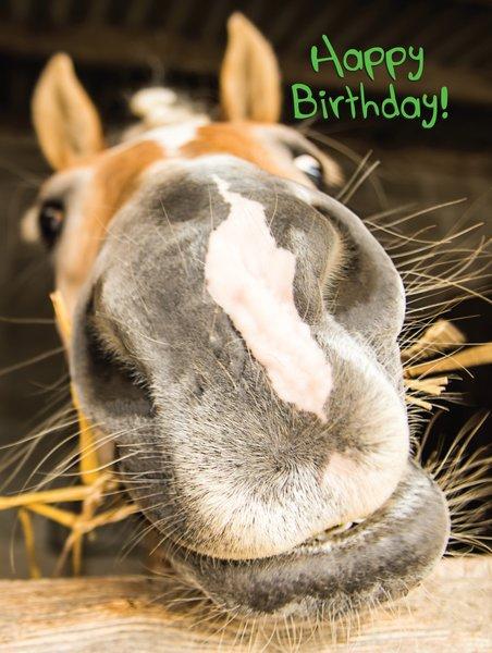 Happy Birthday Cards Veterinarians