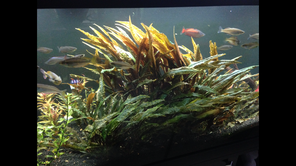 Aquarium Plant Packages Sale