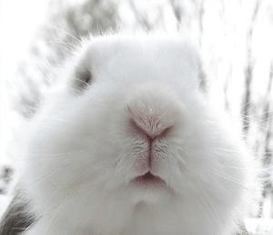 Taylor Hall looks like a bunny