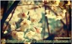 _Vintage_Spring__by_mayukichan
