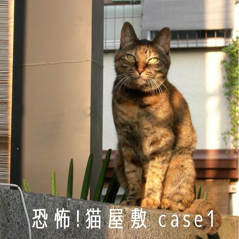 恐怖!猫屋敷1ec