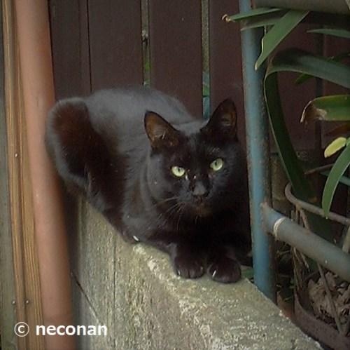 庭猫の繁殖を止める1