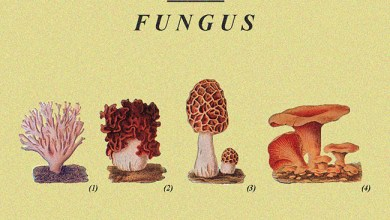 Photo of CASSANDRA (ESP) «Fungus» CD 2017 (Cassandra Records)