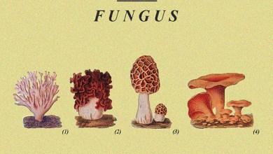 "Photo of CASSANDRA (ESP) ""Fungus"" CD 2017 (Cassandra Records)"