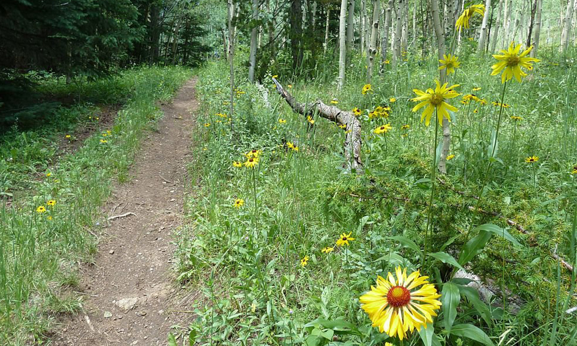 Overlookout (Lookout Connector) Trail Day – July 7