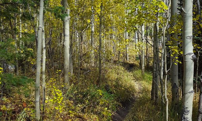 Sherwood Forest Trail