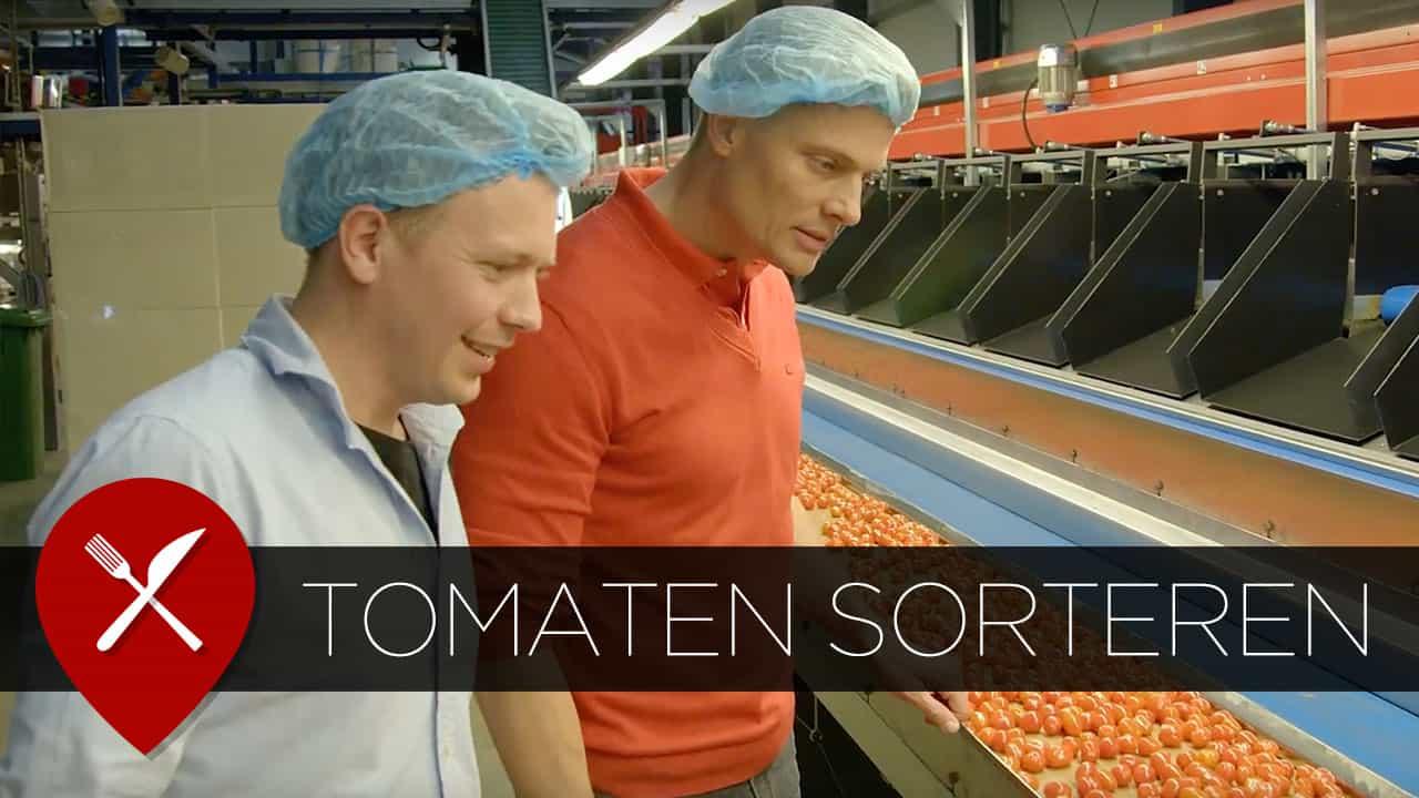 tomaten sorteren