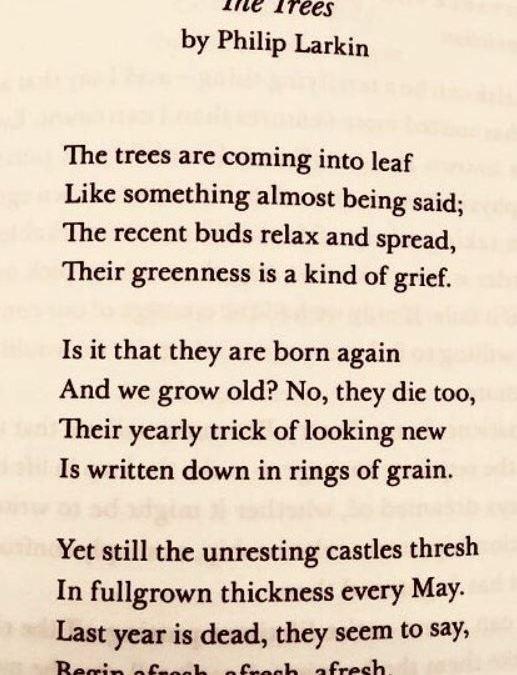 Poem: The Trees, Philip Larkin