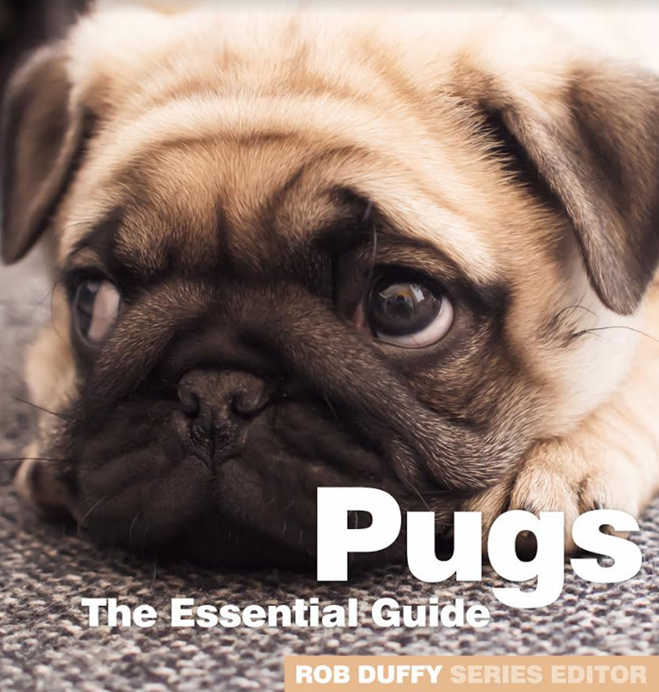 Pugs The Essential Guide Need2know Books