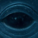 Life Size Blue Whale Eye