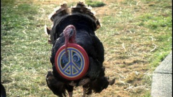 national lampoons holiday reunion turkey peace