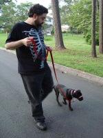 Kora and Widge on a walk