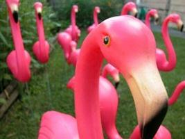 plastic pink flamingo