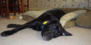 Kora chilling on her Big Girl Bed