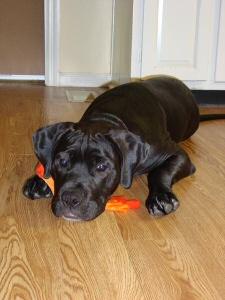 Kora and her Sock