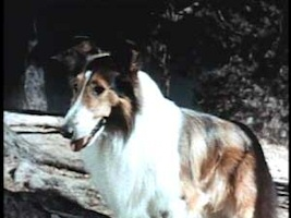 The Star of Lassie's Great Adventure