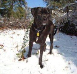 Hellpuppy in snow