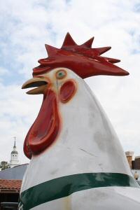 Knott's Chicken