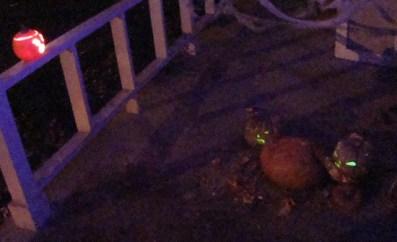 Pumpkin Carnage at Night