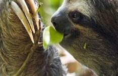 Sloth, bitches!