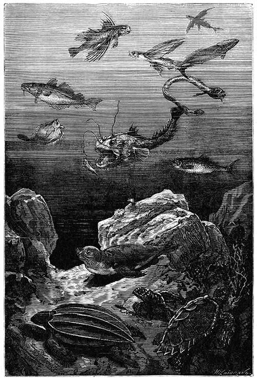 inhabitants-sea