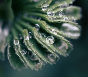 Water Droplets Captured