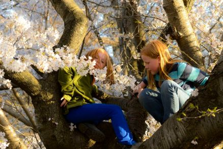 05_girls_in_tree