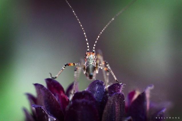 bug macro 3