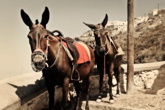 Ride Donkeys to Santorini